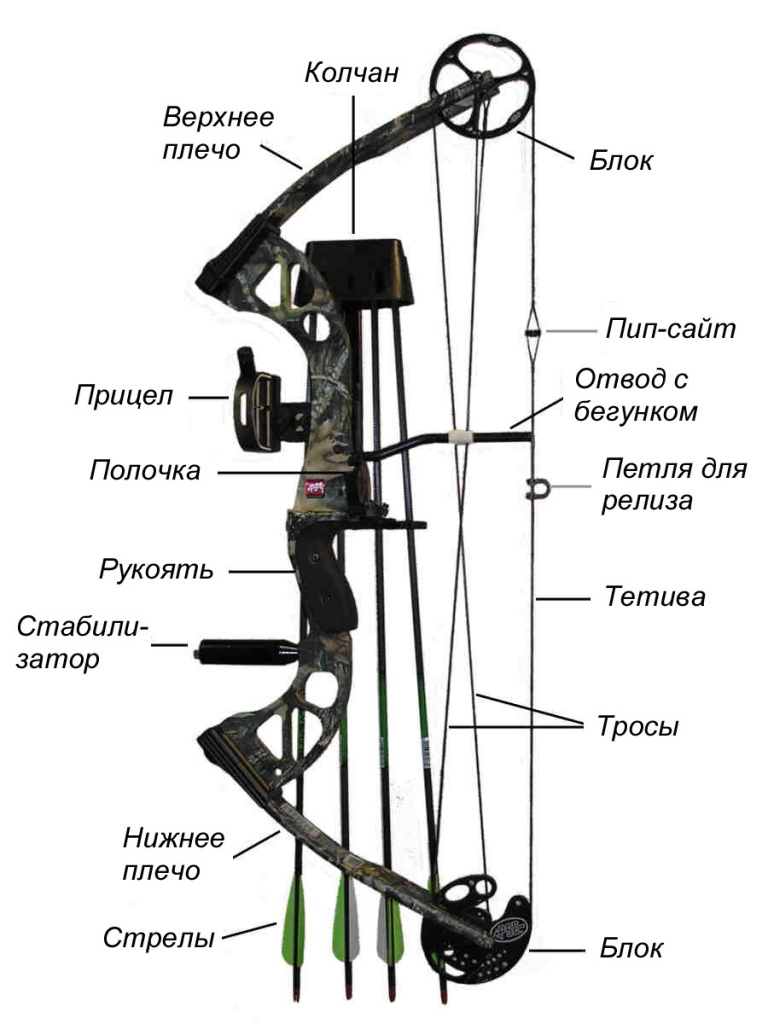 Compound-Bow.jpg